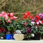 10 plantes d'extérieur résistantes au froid et à l'ombre
