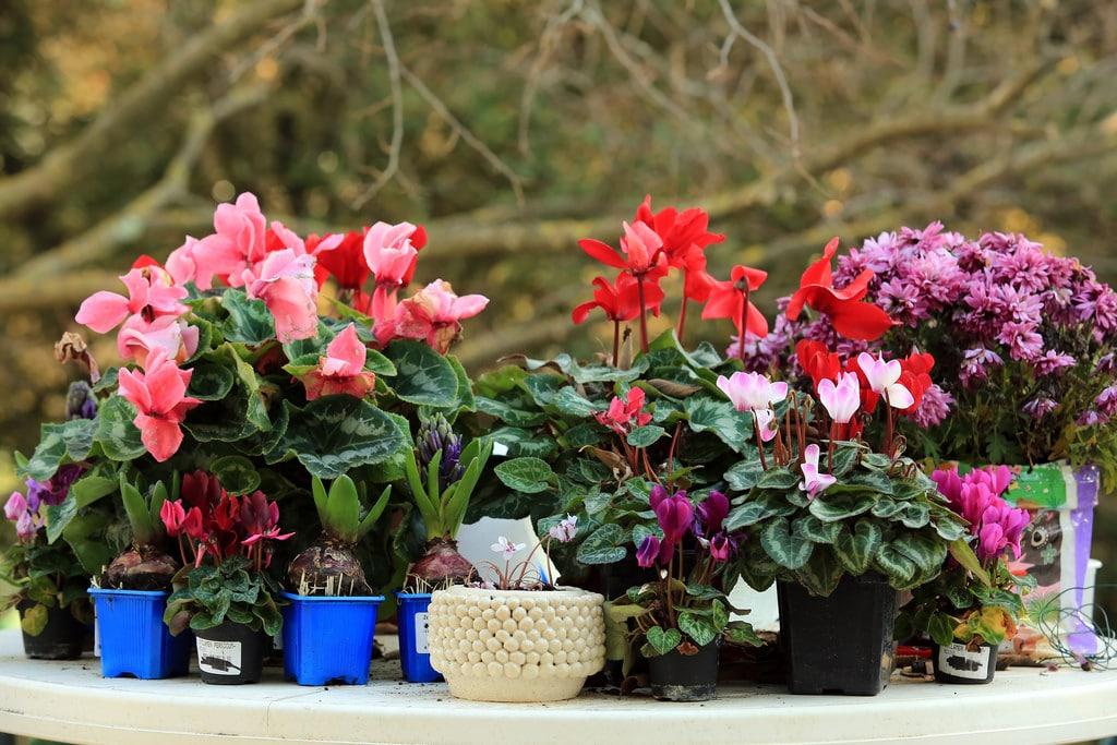 10 plantes d ext rieur r sistantes au froid et l ombre. Black Bedroom Furniture Sets. Home Design Ideas