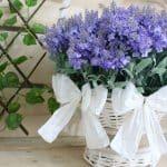Nœud ou ruban d'amour, la plante qui purifie l'air de la maison