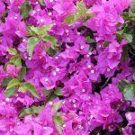 16 plantes de jardin avec des fleurs résistantes au soleil