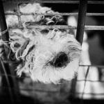 Peut-on emmener son chien lors d'une croisière ?