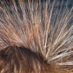 4 gestes pour se débarrasser des cheveux électriques ?
