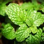 Les herbes aromatiques peuvent être utilisées pour autre chose que la cuisine
