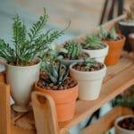 Quelles plantes choisir quand on n'a pas la main verte ?