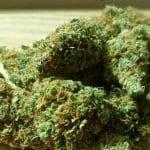 Les fleurs de cannabis CBD, une alternative intéressante pour les fumeurs de joints ?