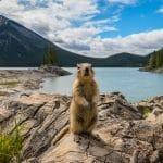 Que faut-il absolument voir au Canada ?