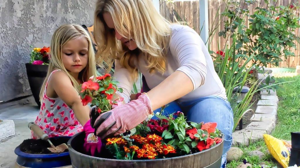 Planter des fleurs colorées
