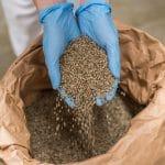 Quelles sont les utilisations possibles des graines de cannabis ?