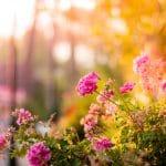 Comment aménager un petit jardin ?