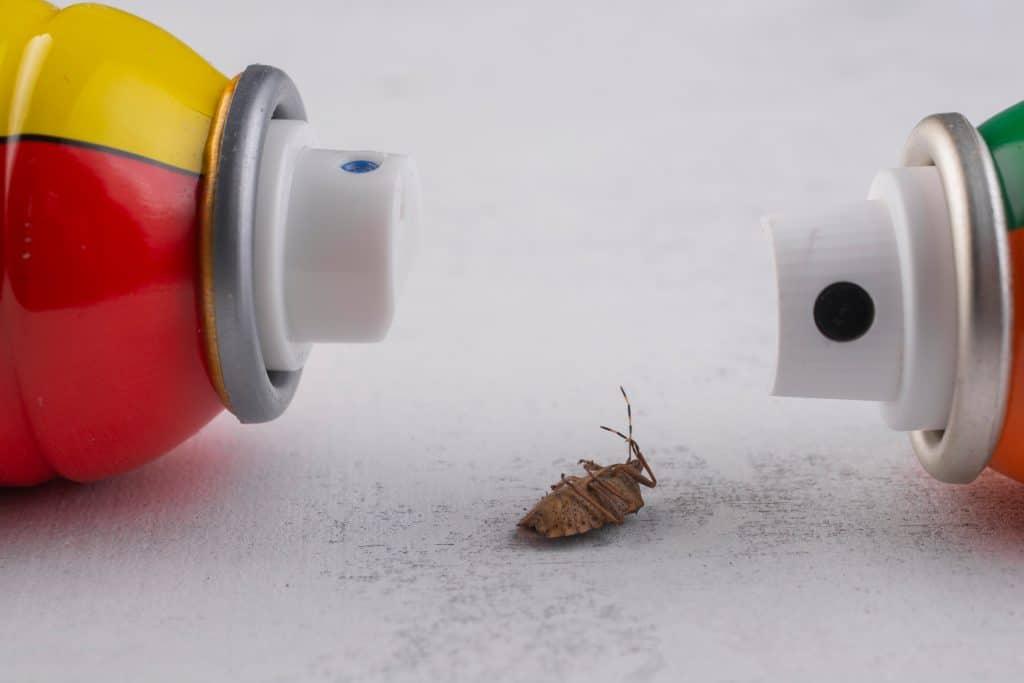 Pourquoi opter pour un insecticide professionnel ?