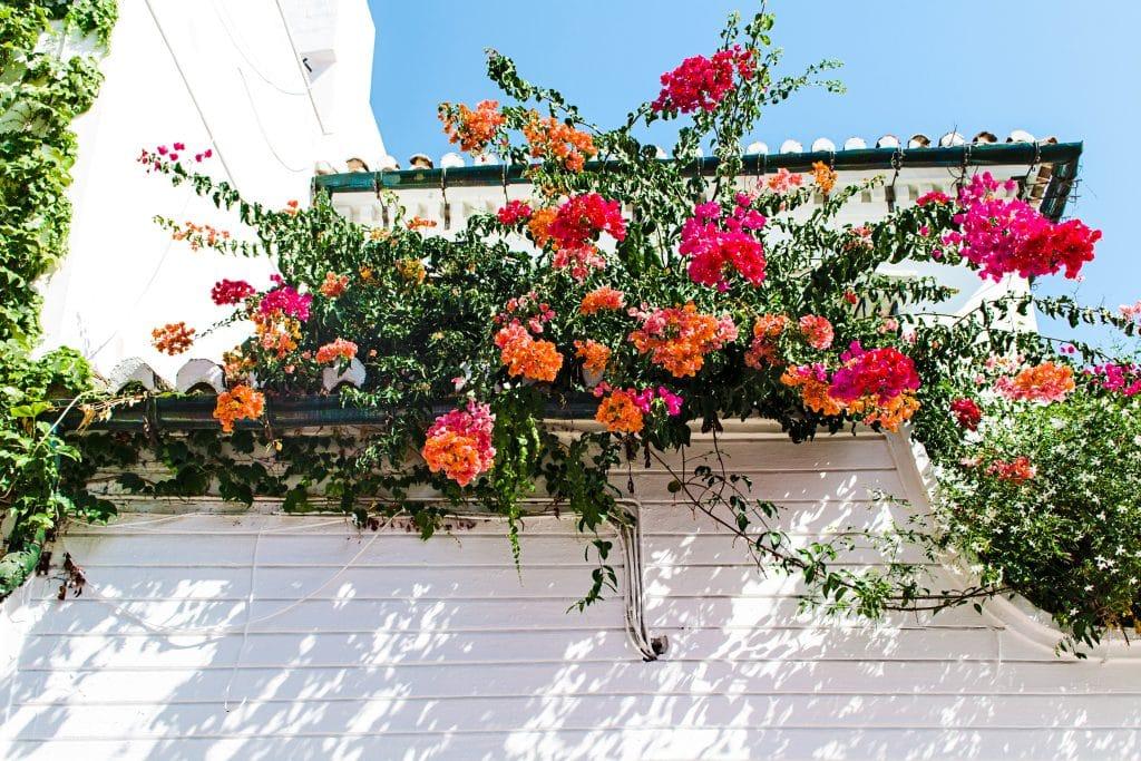 Les fleurs saisonnières à avoir sur son balcon