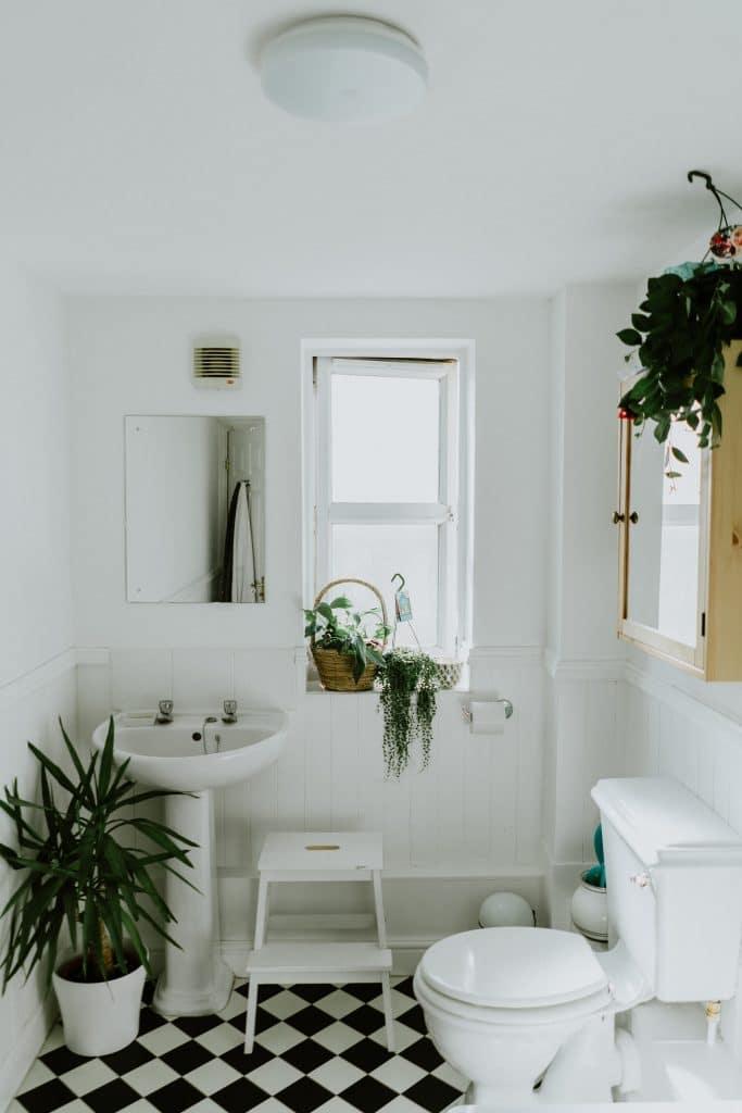 Les plantes de salle de bains