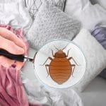 Comment savoir si l'on a des punaises de lit ?